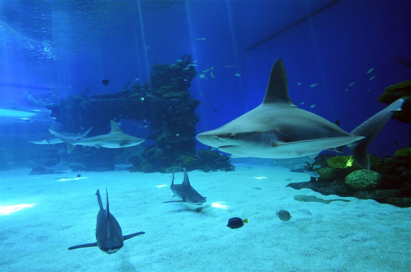 Eilat Shark s world